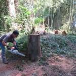 ソーラーシェアリング上総鶴舞(代表・高澤理事)の竹林整備が行われました。